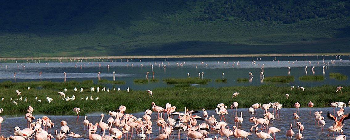 lake-manyara-nationalpark