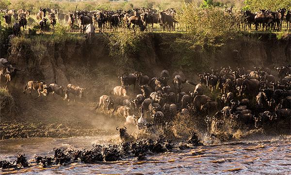 safari-to-Tanzania