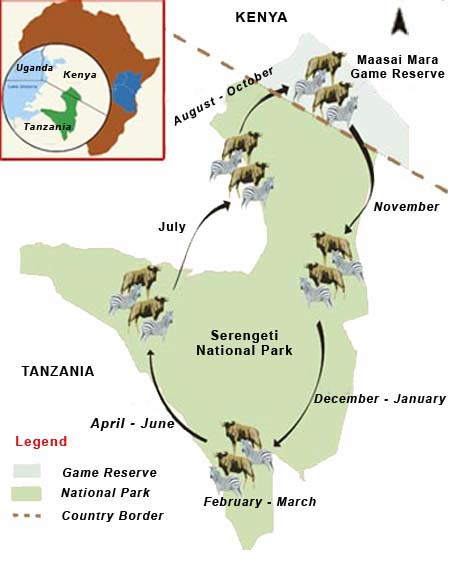 serengeti-migration-circle