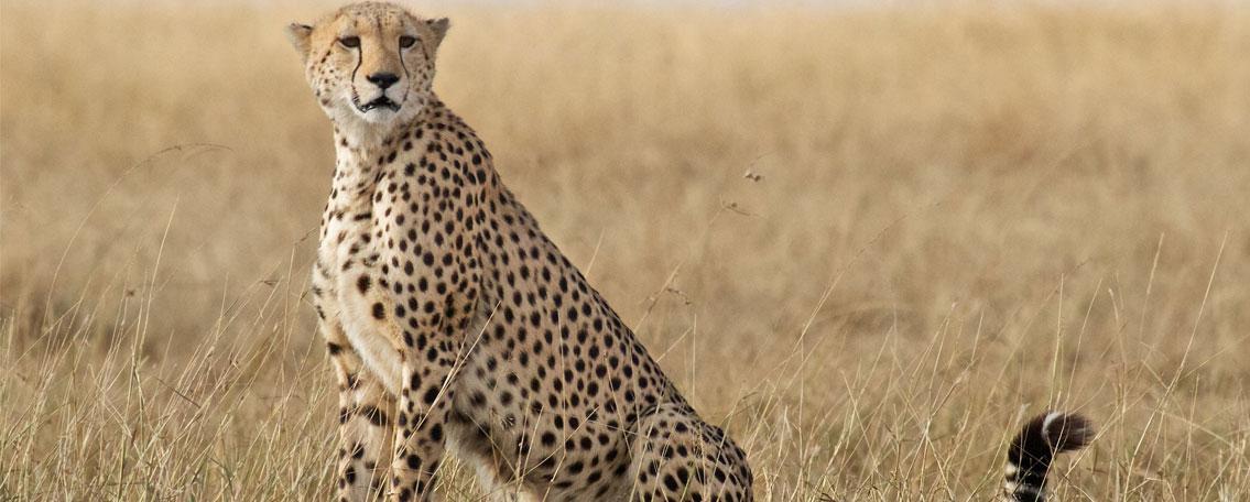 Fixed-Departure-Safaris