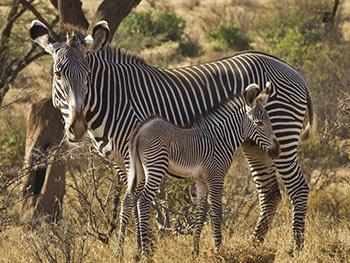 Ngorongoro-Crater-Rim-Walking-Safari