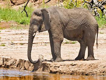 Tanzania-Classic-Safari-Tarangire-National-Park