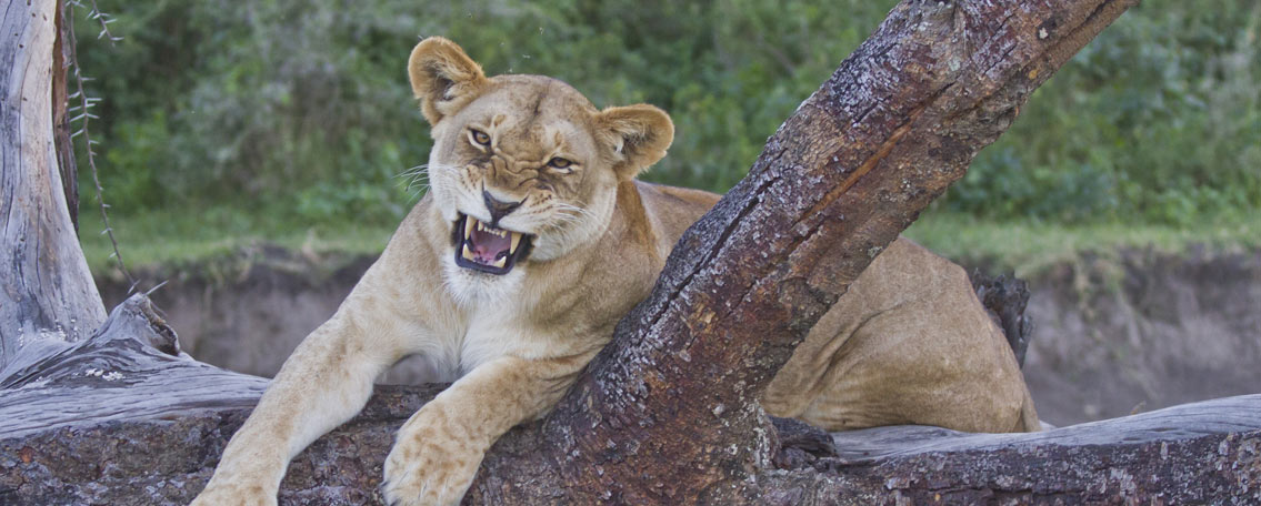 1-Big-Mammals-Safari--6-days