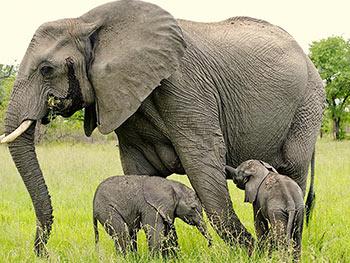 Big-Mammals-Safari--6-days