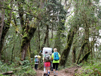 7-Day-Machame-Route