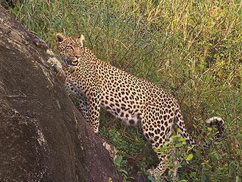 Karatu-Serengeti-National-Park