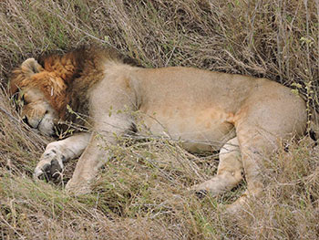 Serengeti-Central-Serengeti-North