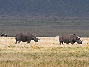 serengeti-ngorongoro-zohar